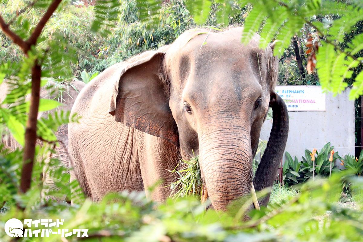 タイ全土の動物園が6月15日より再開、月末まで入場無料