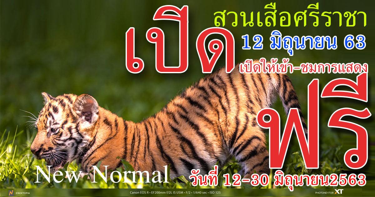 シーラチャ・タイガー・ズーが6月12日より再オープン、30日まで入場無料