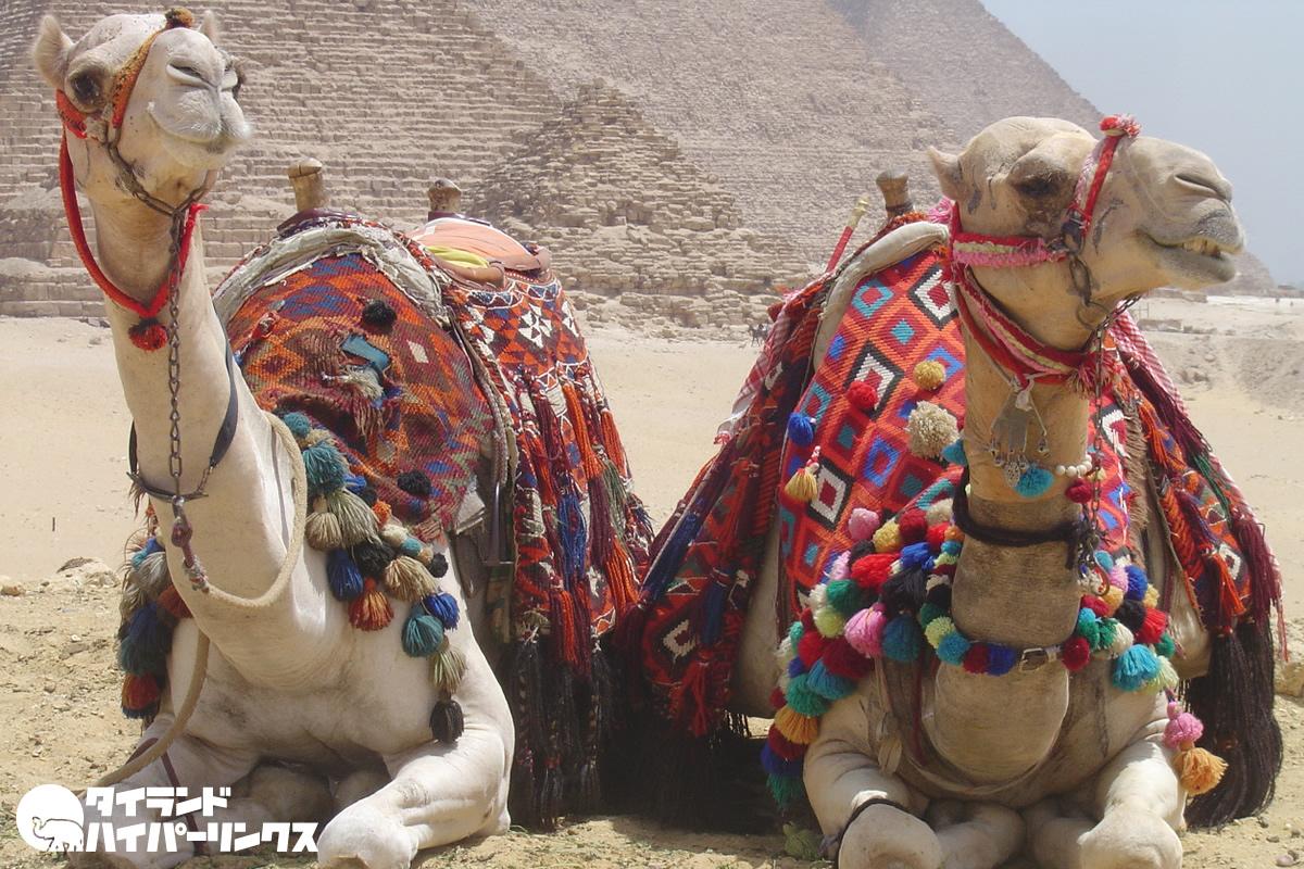 エジプトのタイ人学生が新型コロナウイルスで死亡
