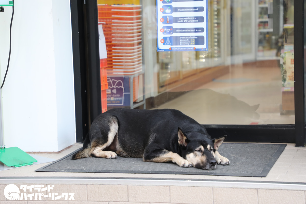 コンビニ犬につまずいて盛大にすっ転ぶ店員さんの動画