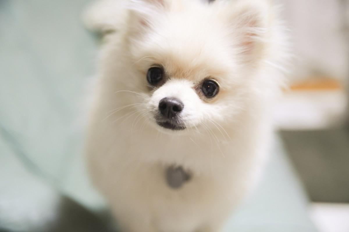 タイに入国したペットの犬に新型コロナウイルス検査を実施