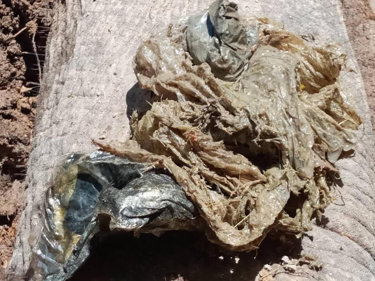若いオスの象、ビニール袋を食べて死ぬ