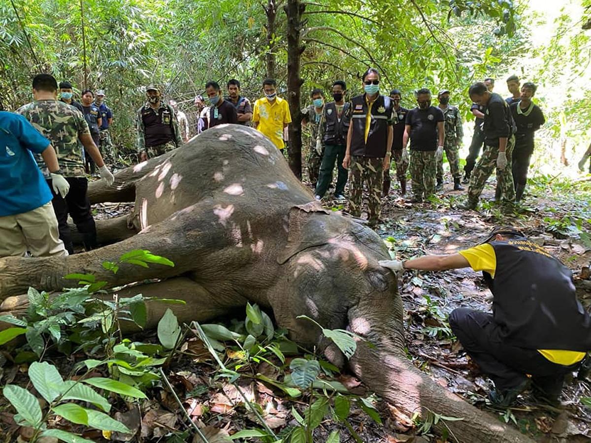 若いオスの象の死体を発見、腸内にビニール袋などのゴミ