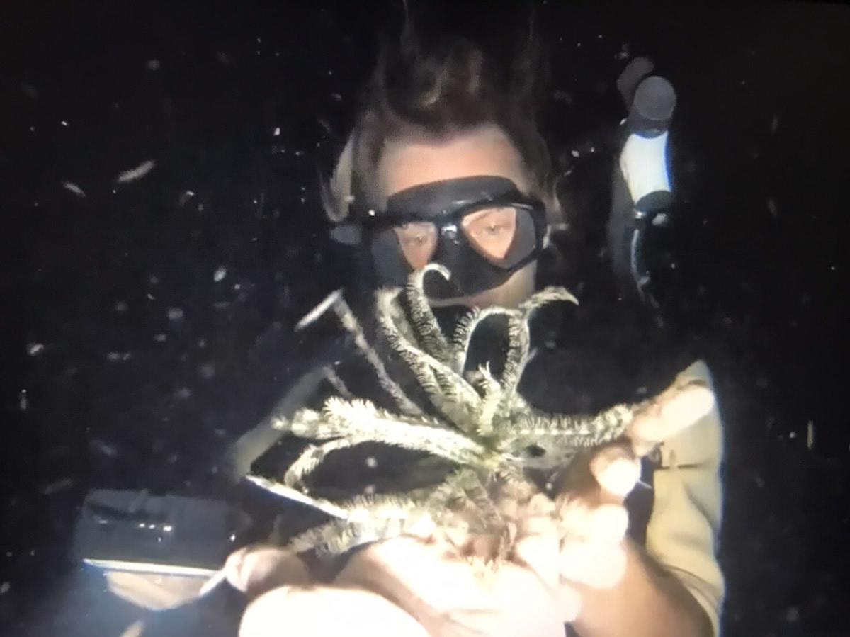 パンガン島でのダイビングで海洋生物を捕まえて撮影、外国人2人を逮捕
