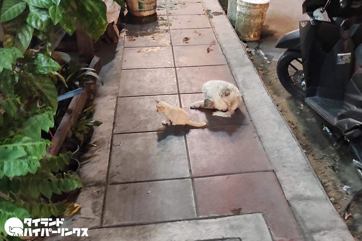 子犬と子猫の仲良しコンビがバンコクの歩道を塞ぐ、最後はウンチ