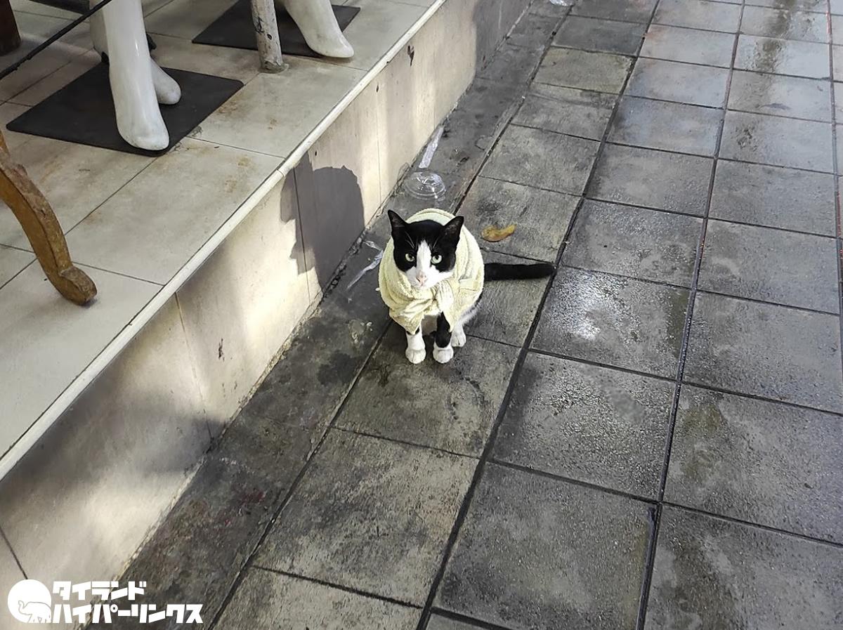 小雨が降る中で歩道に佇むマント猫~バンコク散歩
