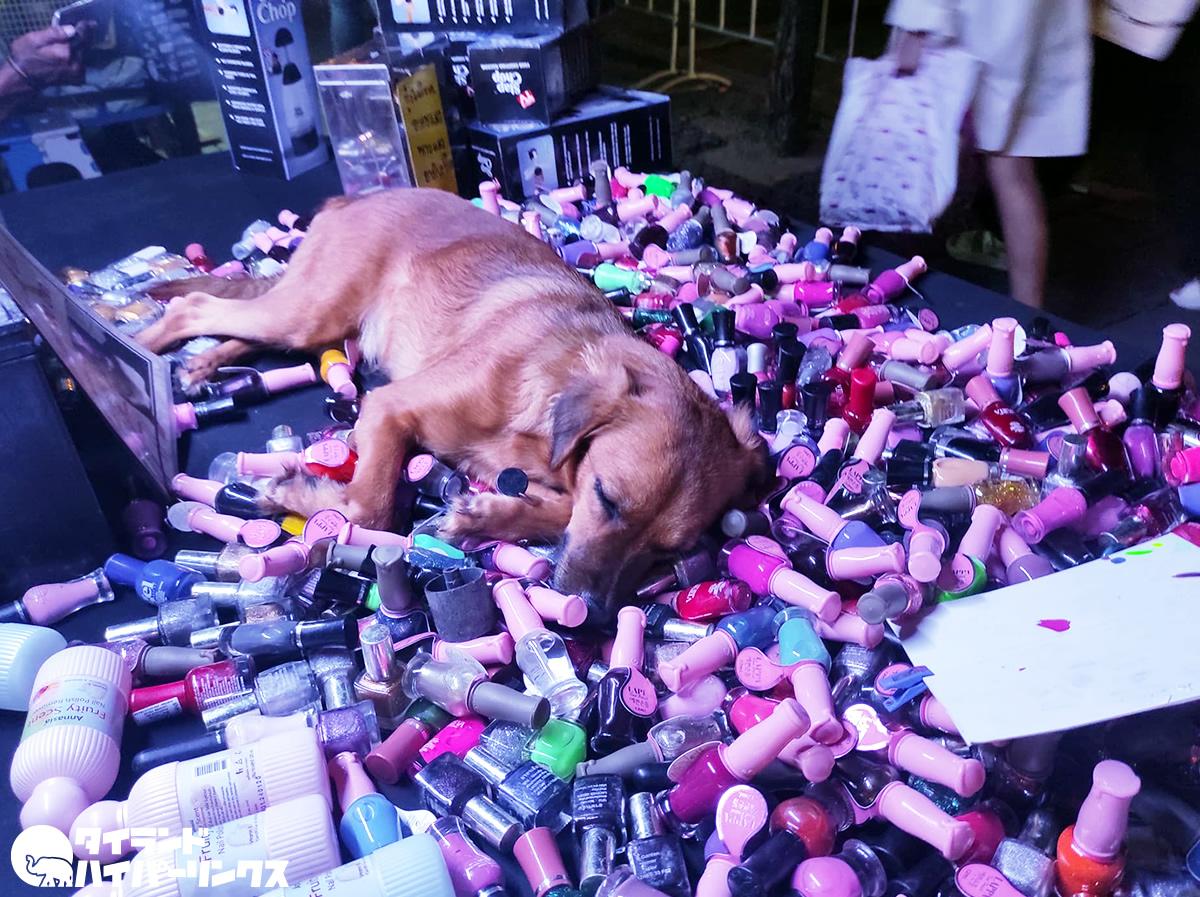 マニキュアのベットで眠る犬~バンコクの街角の風景