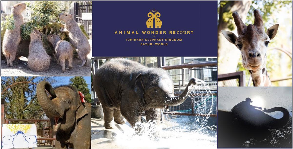 タイの魅力が味わえる動物園「ANIMAL WONDER REZOURT」がオープン