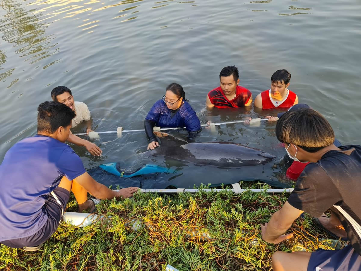 運河に迷い込んだイルカを保護、元気になって海に戻る