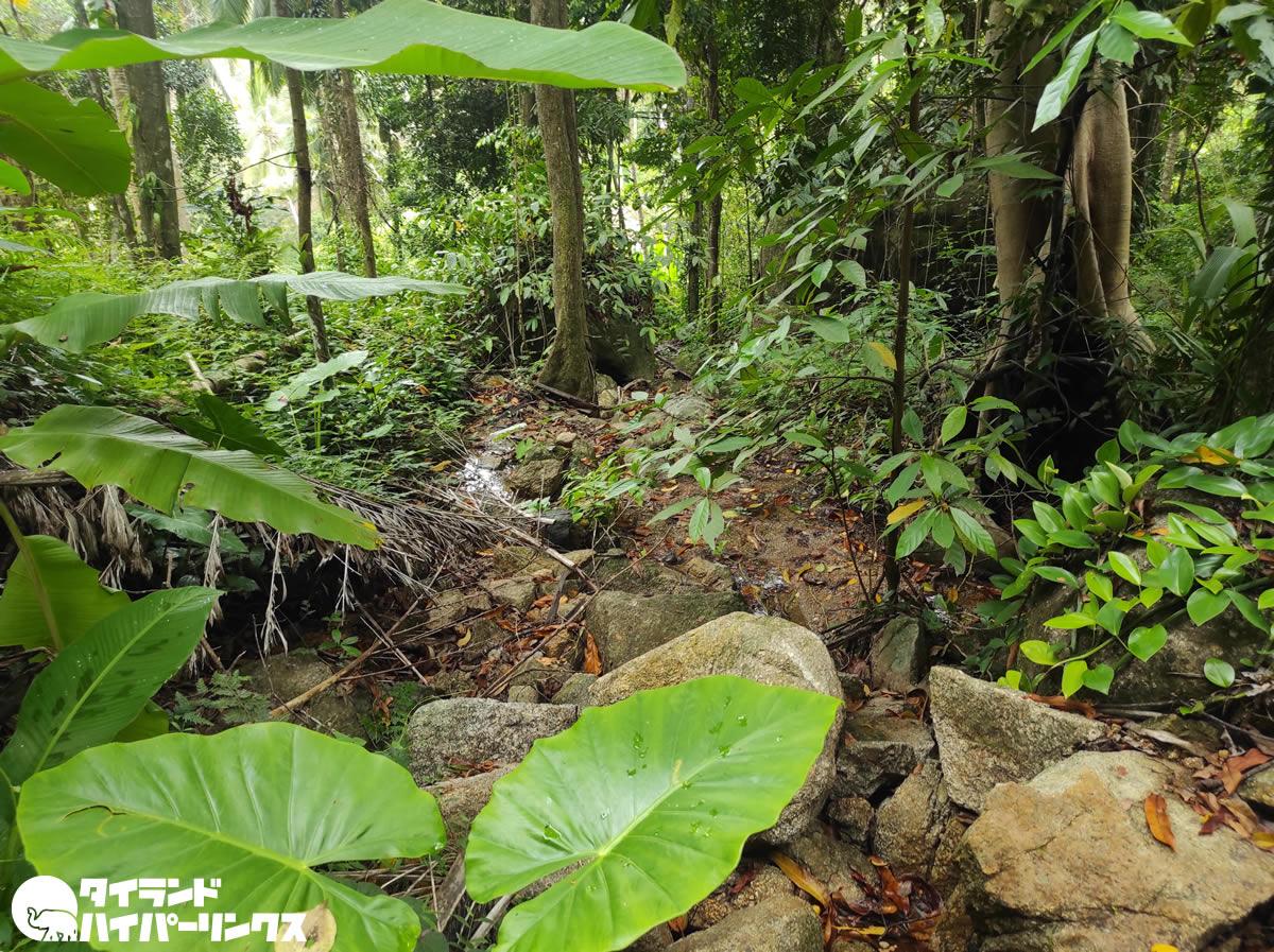 パンガン島のジャングル散歩、雨に降られる