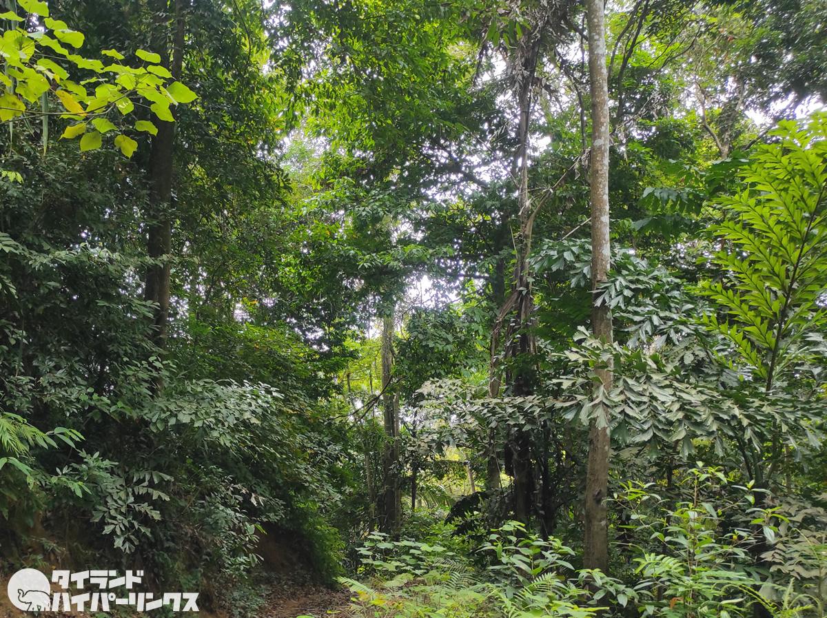 チェンマイ当局、森林火災と大気汚染対策で枯れ葉を購入