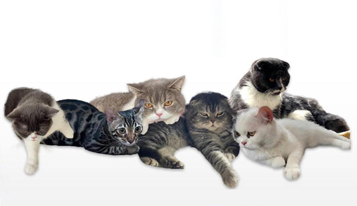 麻薬密売犯の飼い猫オークション開催