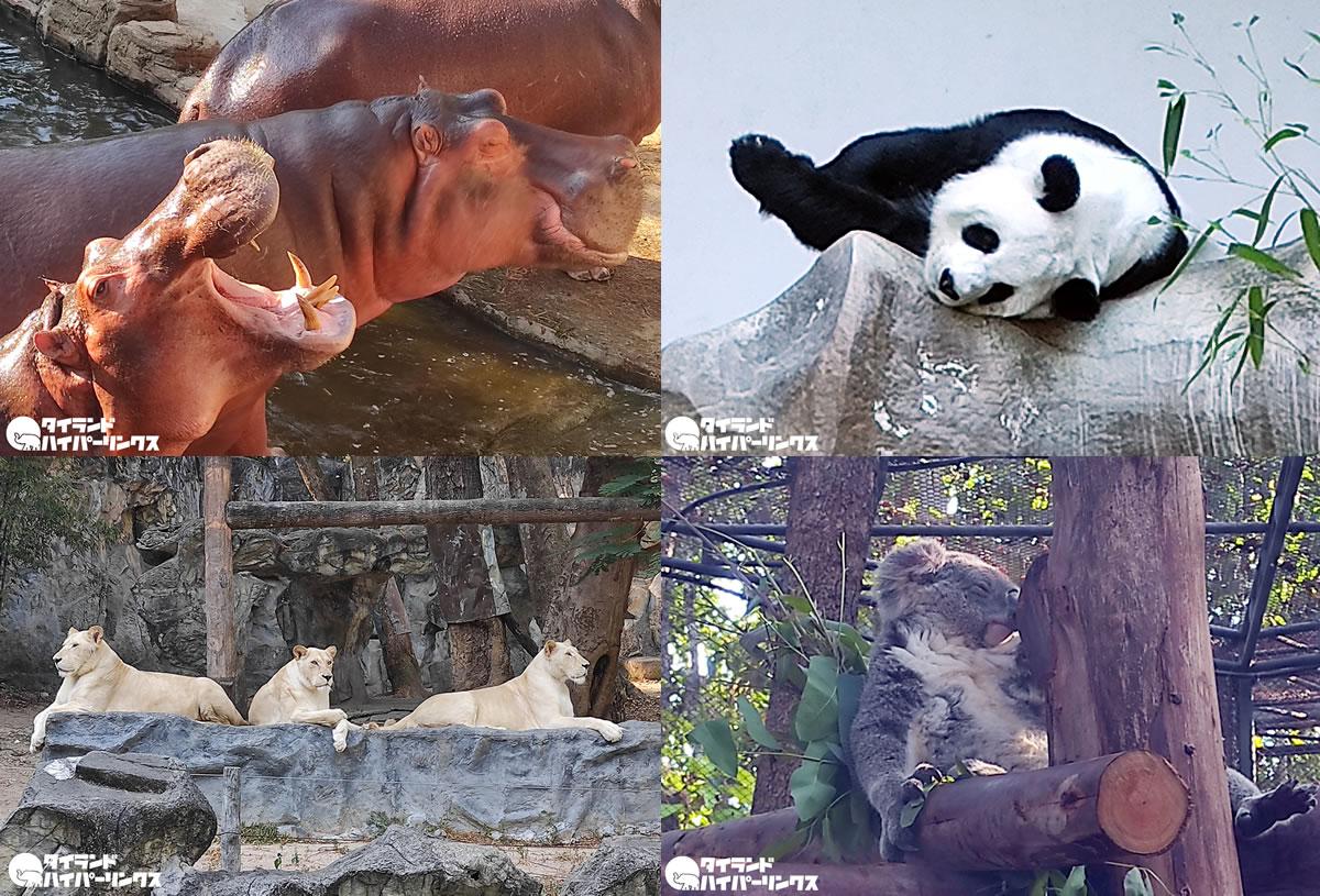 チェンマイ動物園は14日間閉鎖、研修生が新型コロナ感染で
