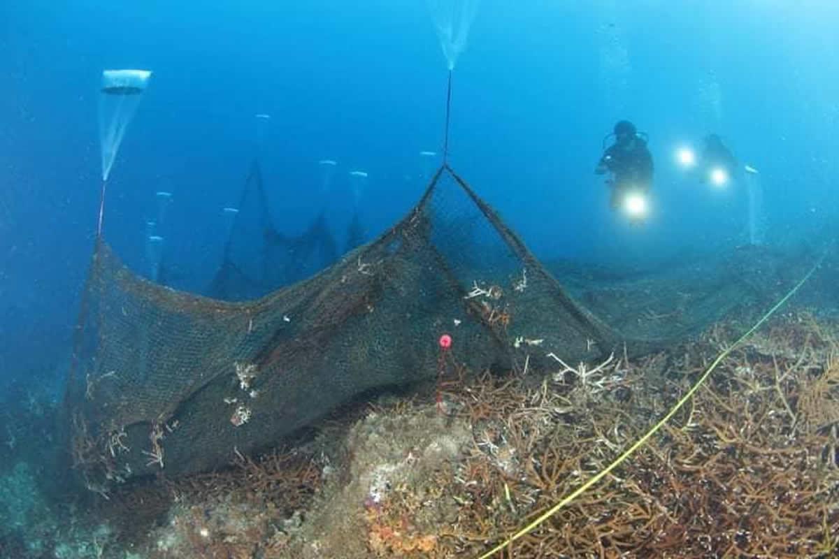タイ海軍ダイバーがサンゴ礁を覆う巨大漁網を撤去