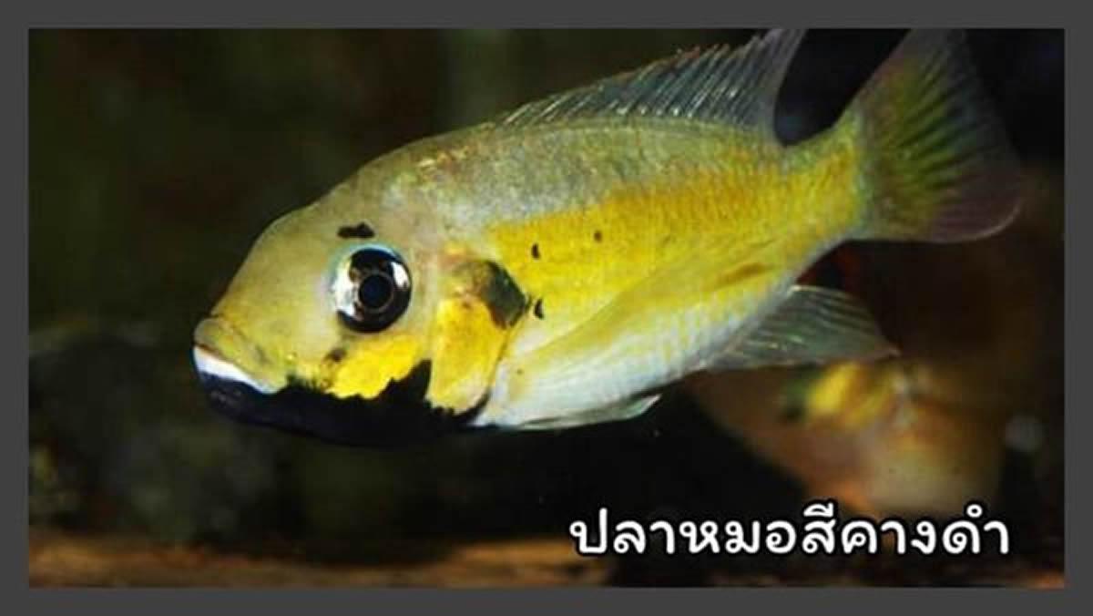 タイ水産局、13の外来種を飼育・繁殖禁止に