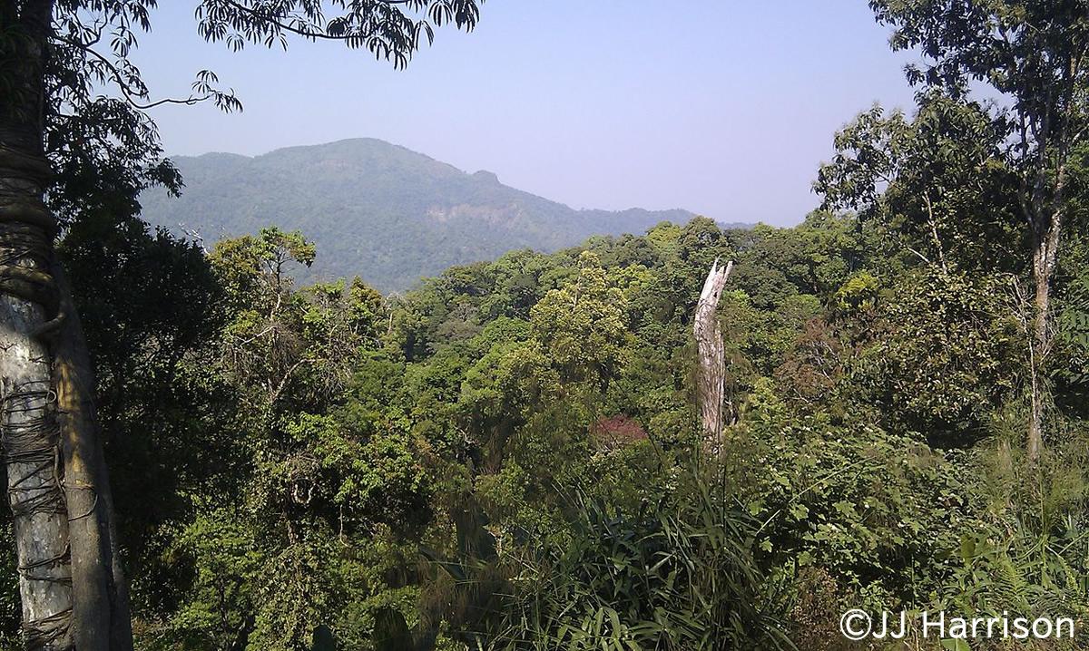 タイの「ケーンクラチャン森林群」が世界自然遺産に登録