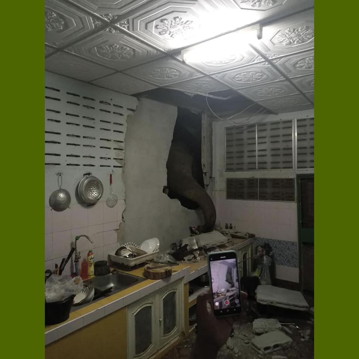 同じゾウさん再び!同じキッチンの同じ壁を破壊