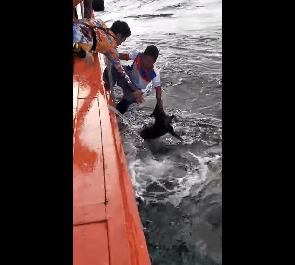 チョンブリ県カーム島沖を泳ぐ犬、漁船が救助