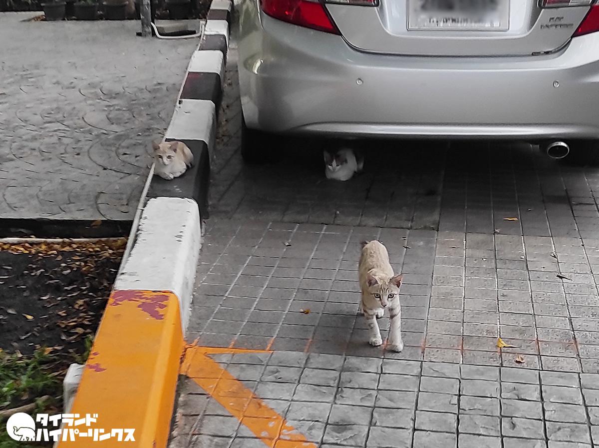 三毛猫ら3匹の子猫から目線をもらう【バンコクの街角の風景】