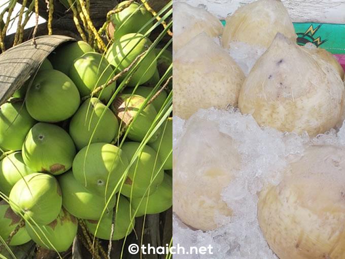 大きなココナッツと小さなココナッツ、2つのココナッツの違いとは?