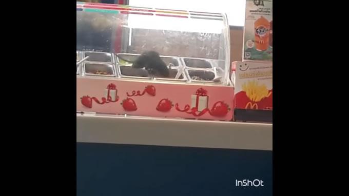 タイ・ハジャイのマクドナルドでショーケース内をネズミが走る(動画あり)