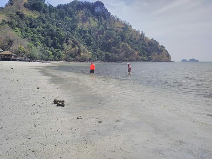 タイ南部タップ島でサンゴの死骸を採取する中国人観光客グループに怒りの声